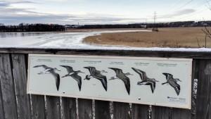 Tauluissa on piirroskuvat sekä lintujen nimetä useammalla kielellä.
