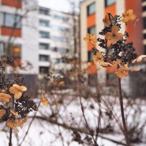 Jenni Laurilan kuvassa Tapulikaupungista on hieno sommitelma ja kauniisti toistuvat värit.